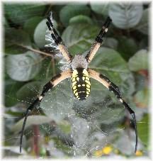 Spider 8/6/13