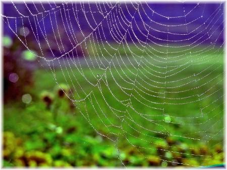 Spider web (photo bt Peter DeHart)
