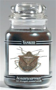 "Unique ""stink bug"" scent for Yankee Candle"
