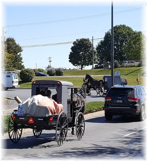 Amish Costco traffic 10/5/16
