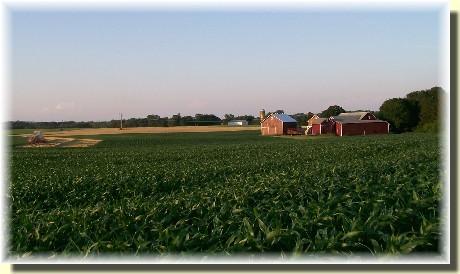 Barley Harvest 6/15/09