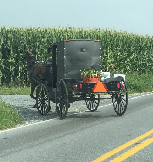 Buggie with corn, New Holland, PA 8/15/19