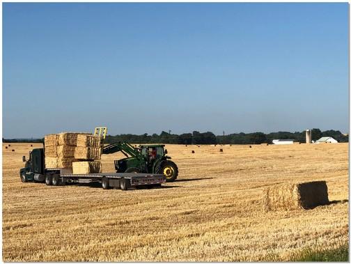 Lancaster County harvest scene 7/9/18 (Click to enlarge)