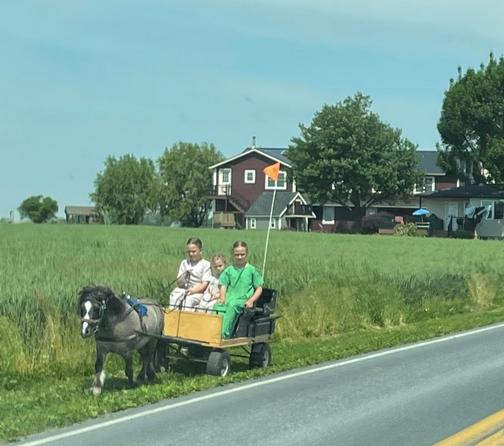 Children on cart