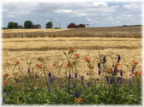 Harvest on Colebrook Road 6/21/18 (Click to enlarge)