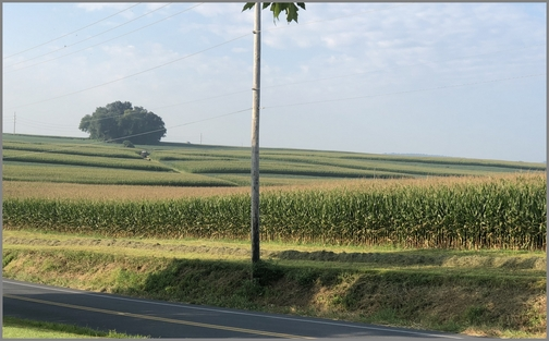 Colebrook Road farm 8/29/18 (Click to enlarge)