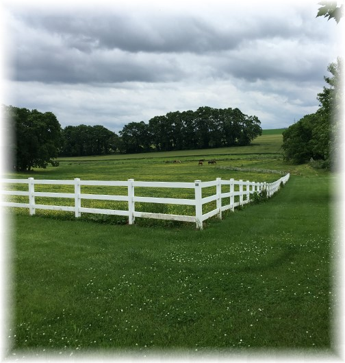 Colebrook Road horses 6/5/16