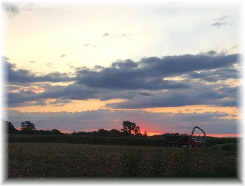 Corn harvest 9/1/16