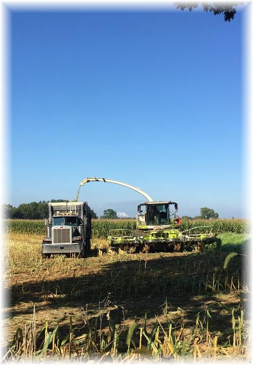 Corn harvest 9/15/17