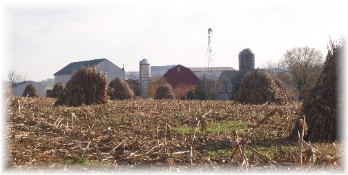 Corn shocks on Lancaster County PA farm