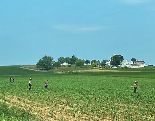 Family field work near Intercourse, PA