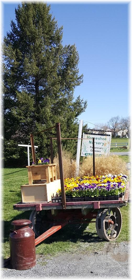 First seasonal roadside flower wagon 3/29/17