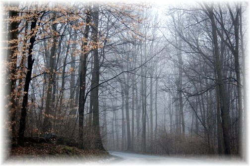 Foggy morning (photo by Doris High)