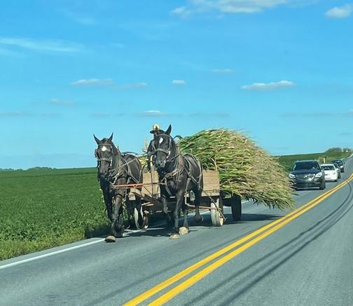 Hauling corn on Landisville Road