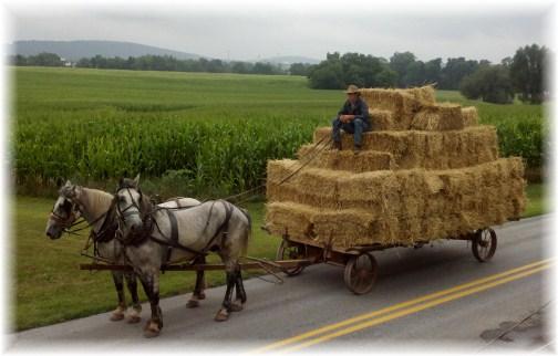 Mennonite hay wagon
