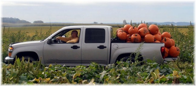 Joe Snavely, pumpkin harvest, Lancaster County, PA