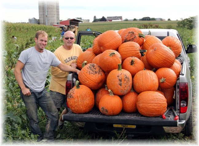 Joe Snavely with son, pumpkin harvest, Lancaster County, PA