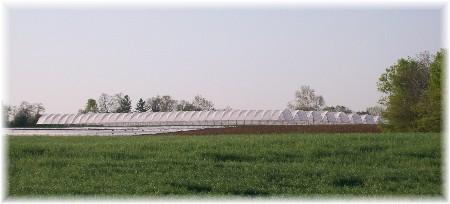 Greenhouses 4/19/10