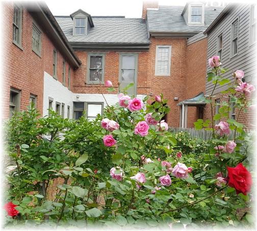 Lancaster City flower garden 5/26/17