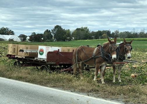 Pumpkin harvest team 10/17/19 (Click to enlarge)
