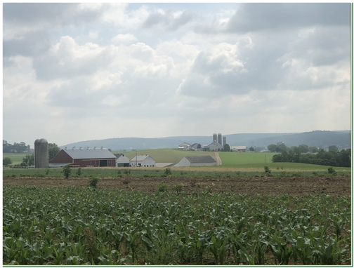Lancaster County farm scene near New Holland 6/6/19 (Click to enlarge)