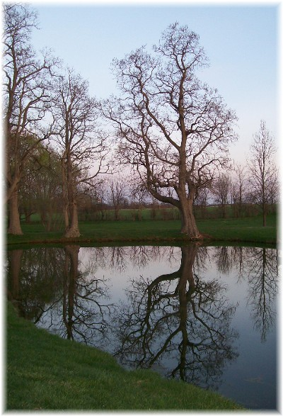 Tree and pond, Lancaster County, PA