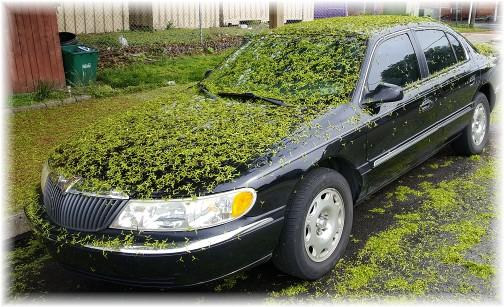Leaf-covered car, Columbia, PA 4/29/17