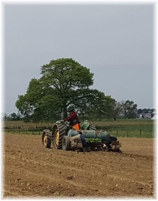 Planting lettuce 5/4/17
