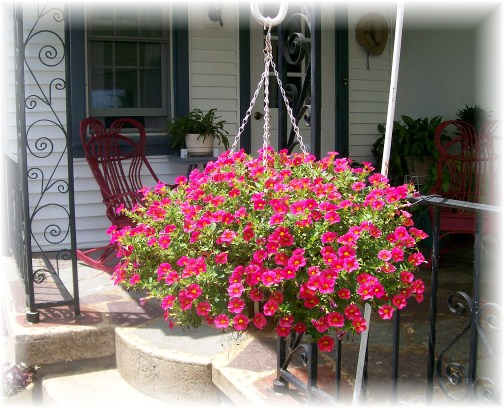 Hanging flower basket on the Longenecker farm in Lancaster County PA