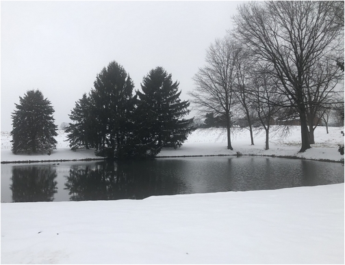 Martin farm pond, Mount Pleasant Road, Lancaster County, PA 3/2/19 (Click to enlarge)