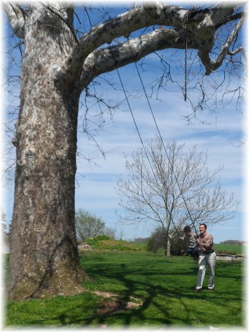 Martin giant tree swing 4/21/13