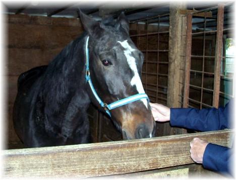 Horse in Farmersville, PA