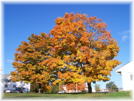 Maples in Mastersonville PA