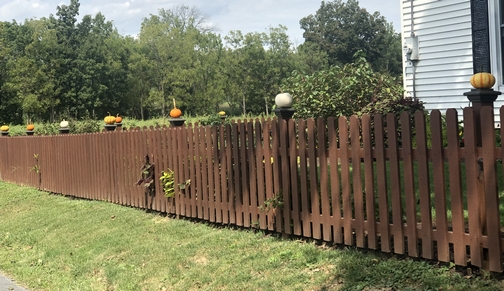 Meadow View Road fence pumpkins 9/8/19