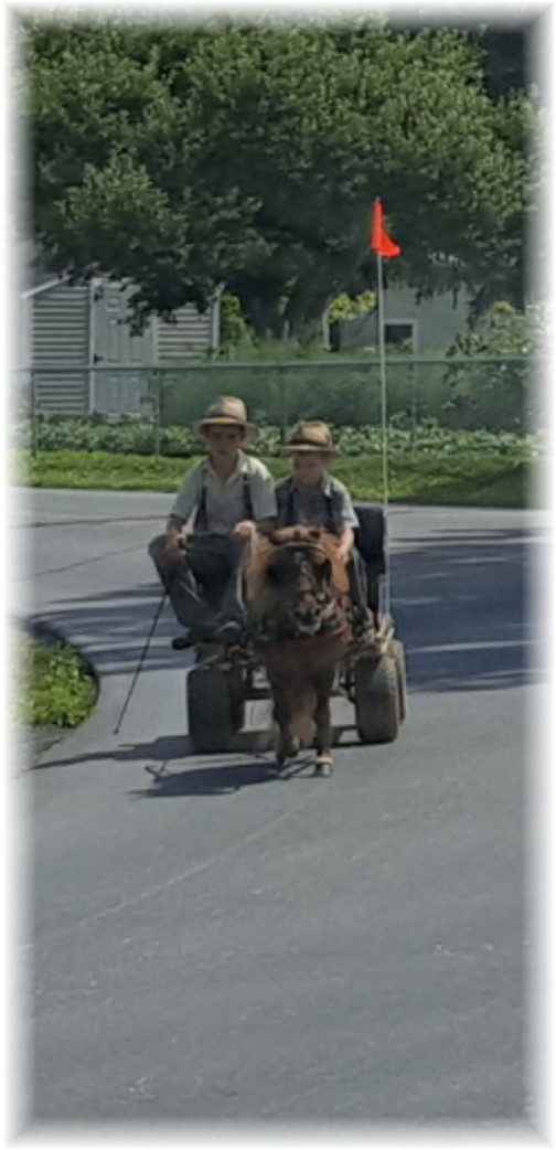 Old order Mennonite boys, Lancaster County, PA 6/30/16