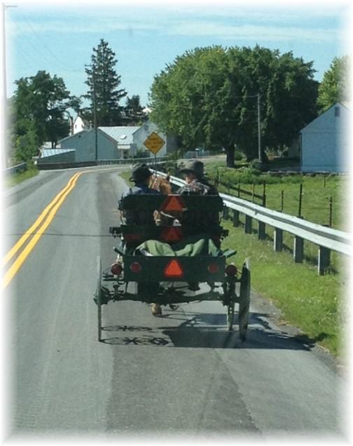 Mennonite boys on wagon 7/23/15