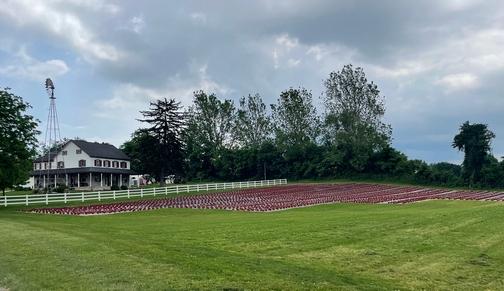 Mums on Mennonite farm