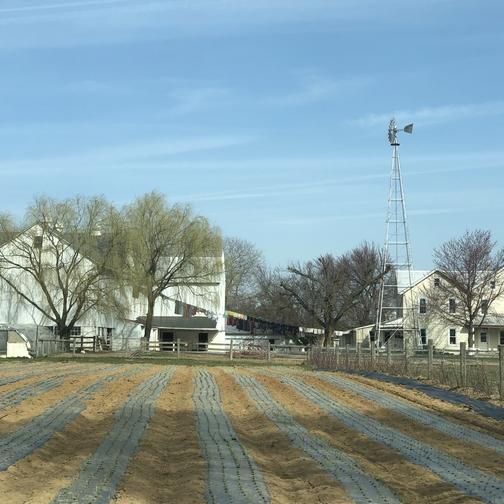 Mennonite farm, Lancaster County PA 4/4/19 (Click to enlarge)
