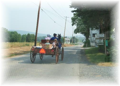 Mennonite open cart in Lancaster County PA 6/9/11