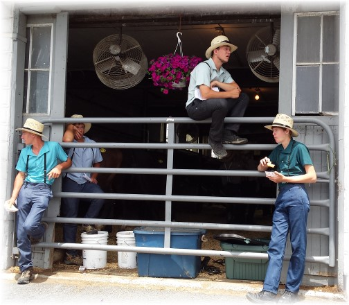 New Holland horse auction 7/4/14 (photo by Lee Smucker)