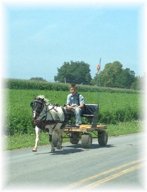 Mennonite boy on cart 7/10/15