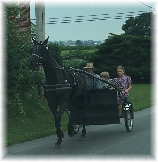 Old order Mennonite family transportation 7/27/17