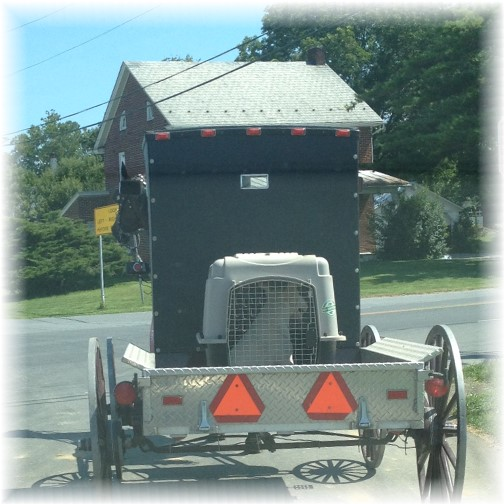 Old order Mennonite pick-up with dog in Lancaster County 8/7/15