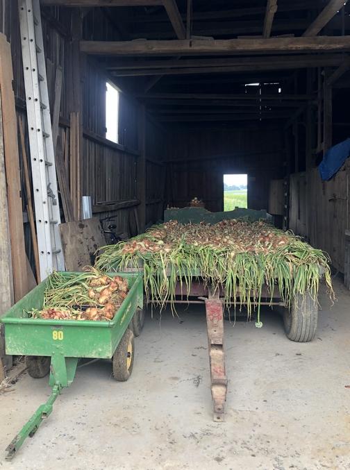 Onion wagon 07-11-19
