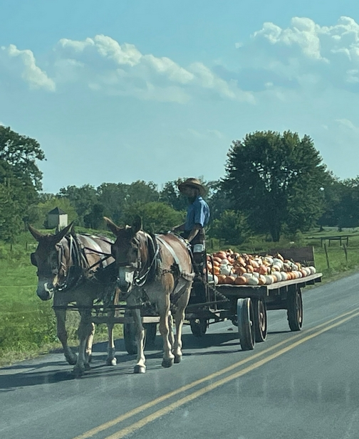 Pumpkin harvest on Harvest Road
