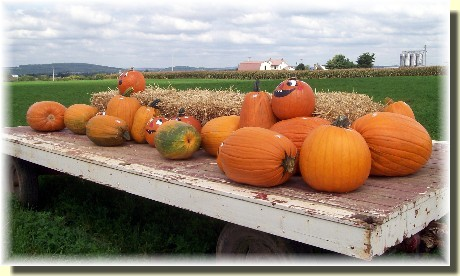 Pumpkins on wagon in Lancaster County