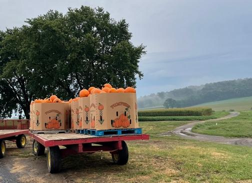 Pumpkin wagon near Strasburg, PA