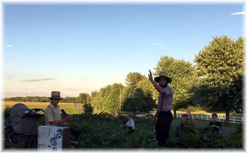 Rhubarb harvest on Kraybill Church Road 6/15/18