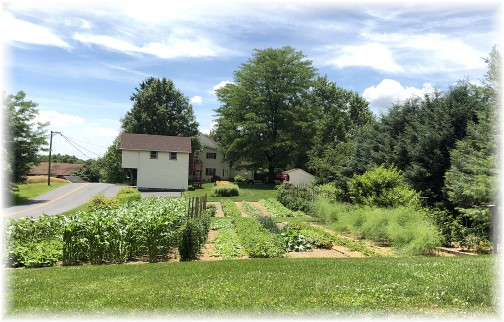 Risser Mill Road garden, Lancaster County, PA 6/26/18 (Click to enlarge)