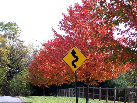 Risser Mill Road foliage